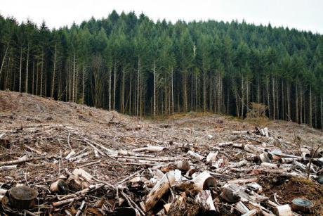 Bioenergy Push Leading to Massive Land Footprint