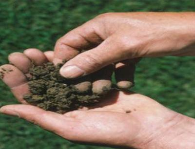 Urea Price Set to Increase in India Due to Energy Costs