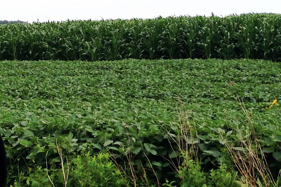 Global Fertilizer Demand Rebounding
