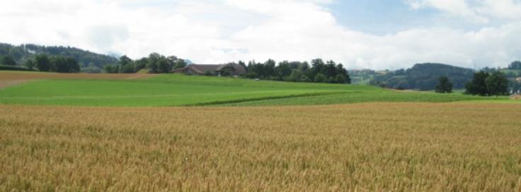 Assessing Latest Developments in Fertilizer Technology and Markets