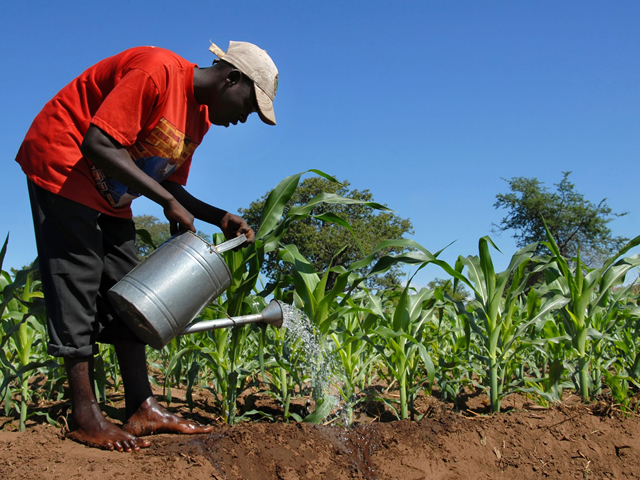 Greening Africa: EU & AU Step up Cooperation on Agri-Business and Food System Transformation
