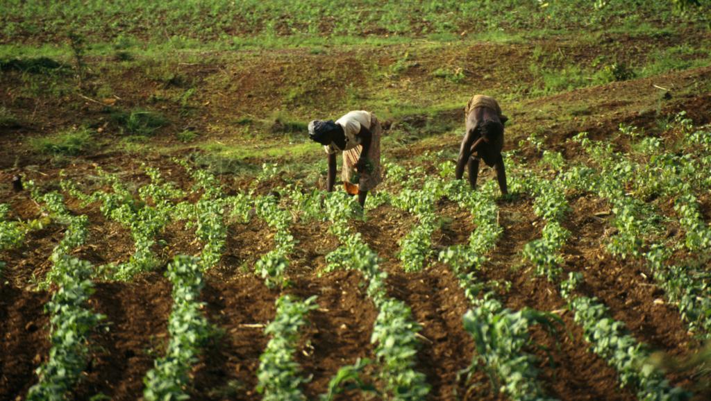 Market Update: Louis Dreyfus Sells Its African Fertilizer Business