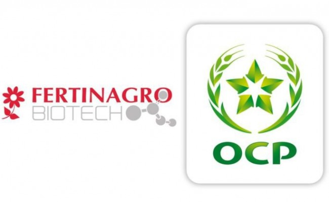 Morocco's Phosphate Giant OCP Buys 20% of Spain's Leading
