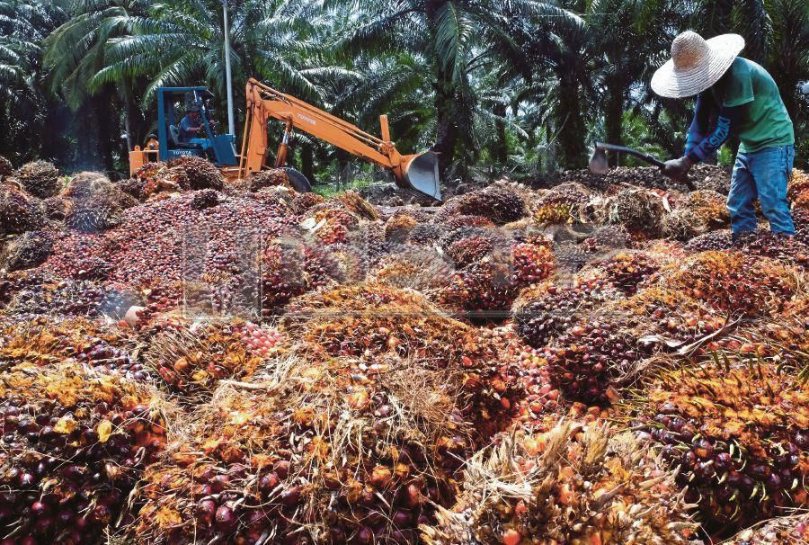 Anti-Palm Oil Lobbies Hurt Environment & EU's Poorest Members