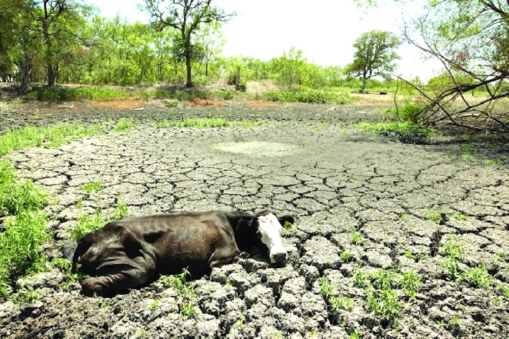 Food. Feed. Fibre. – OCP Group's Mission in Line with 'World Day to Combat Desertification and Drought'